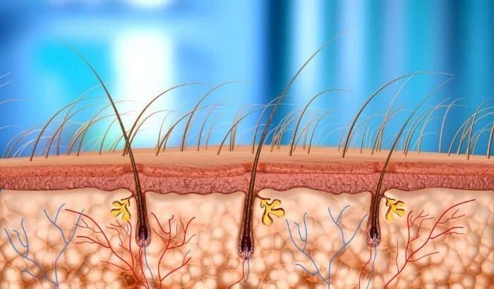 circulation of beard hairs