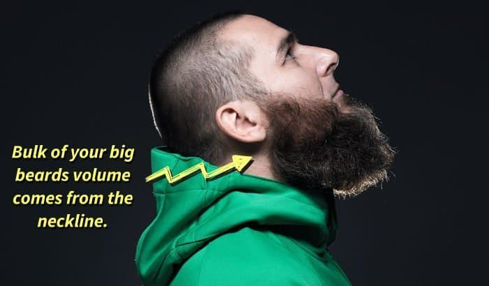 long beard neckline