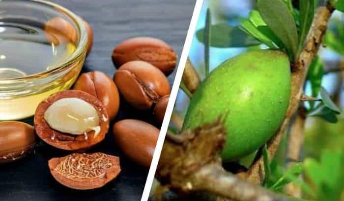 argan kernels and argan fruit