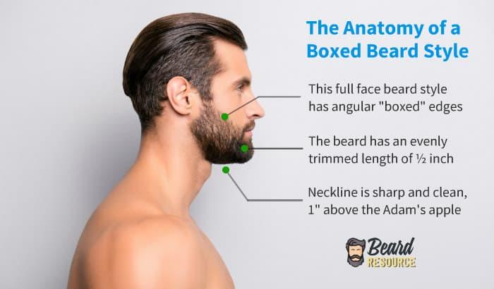 short boxed beard style anatomy